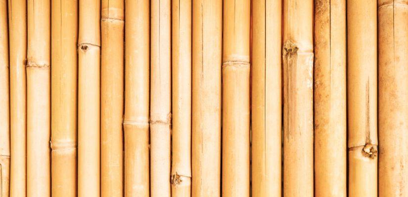 דק במבוק: יתרונות ששווה להכיר