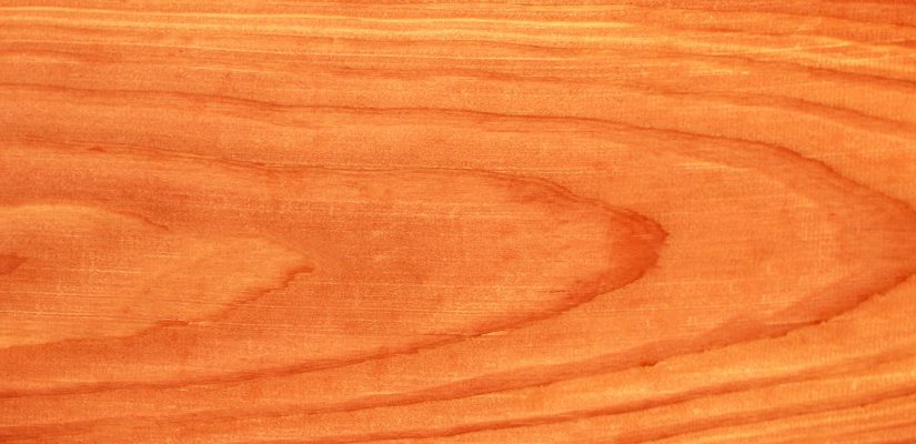 על עץ הסידר ועמידותו הטבעית בפני מזיקים ופגעי מזג האוויר