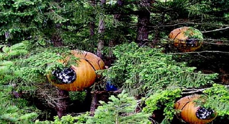 בתי העץ המדהימים האלה נקראים Free Spirit Spheres (כדורי הרוח החופשית)